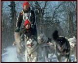 Dog Sledding in the Absorka Mountains